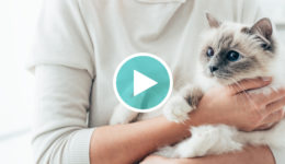 World's Best Cat Litter Webinar